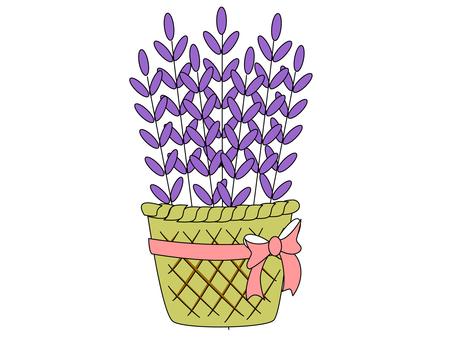 ラベンダー ~ 花束・フラワーギフト