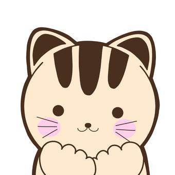 흥분하는 고양이