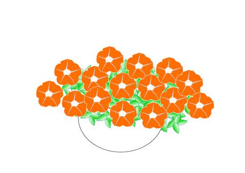 Petunia orange