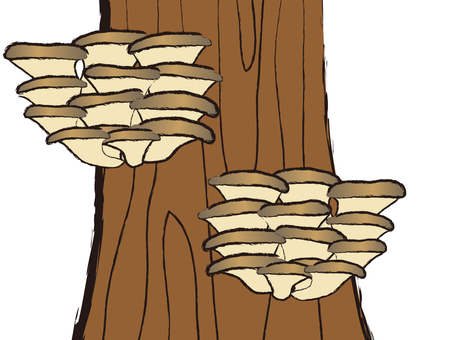 Japanese Mushrooms Hirate Make