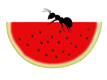 Ants and watermelon