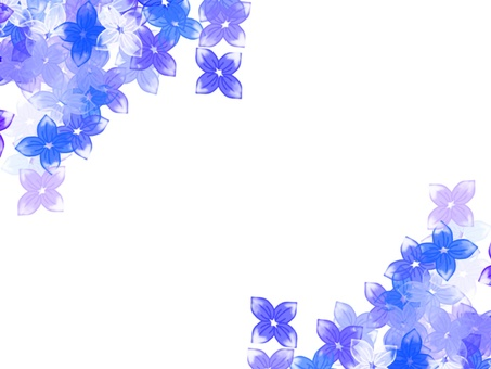 Campanulaceae 3