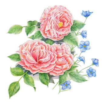 Rose 2015 color pencil ★ 0049-R