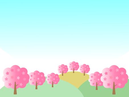 櫻桃樹和藍天