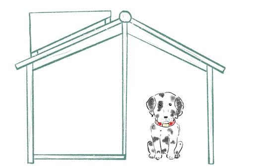 Dog coat Dalmatian