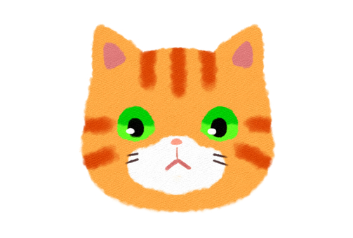 Tea tiger cat's face Front view