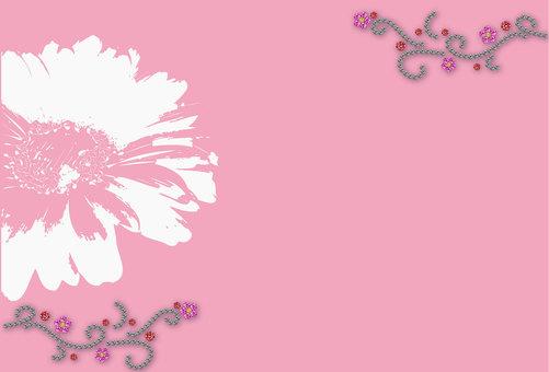 거베라 핑크