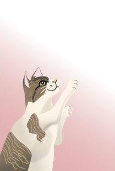 Stunny cat 01
