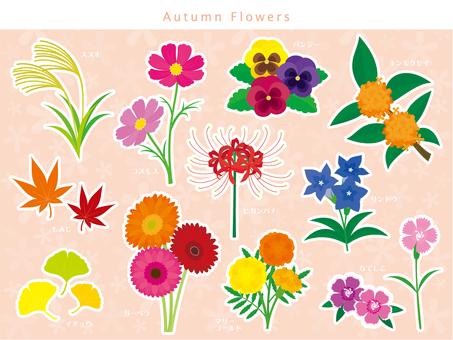 가을 꽃 세트