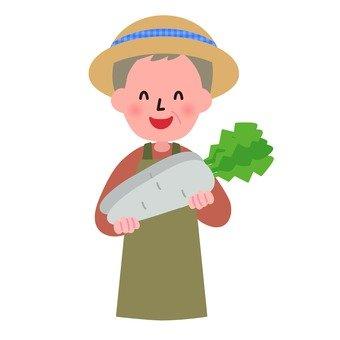 Harvest of radish