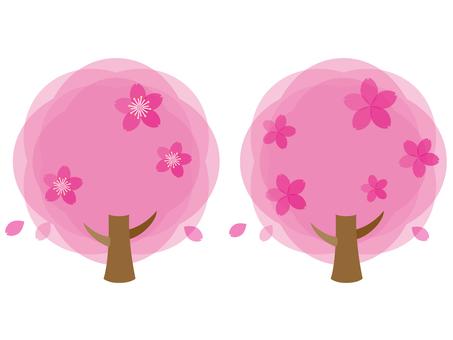 벚꽃 나무 핑크
