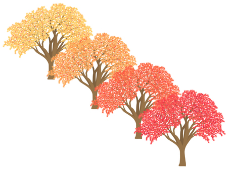 Color maple No.2