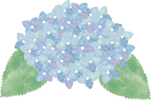 水彩風格繡球藍