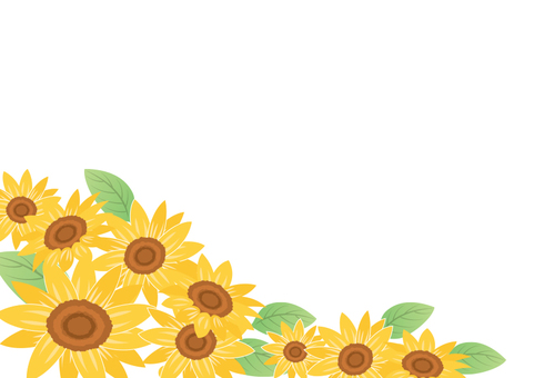Summer material 003 Sunflower background