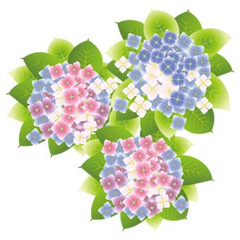 수국 꽃 15