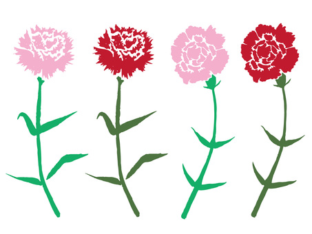 Carnation on Mother's Day