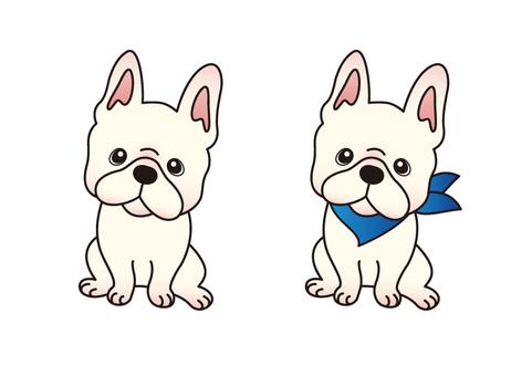 Dog _ French Bulldog 2