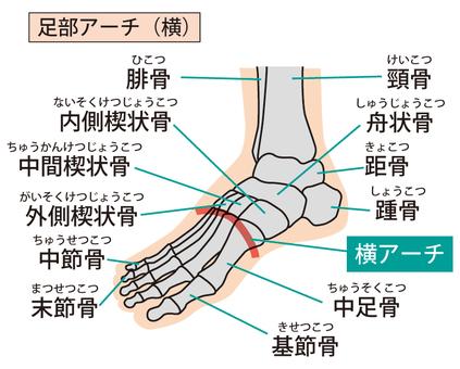 Foot arch (sideways)