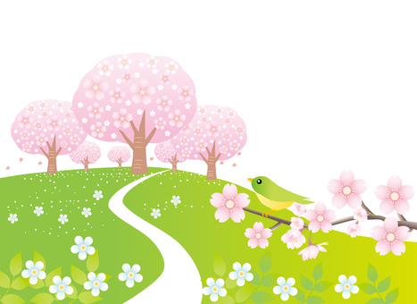 Cherry blossoming hill landscape