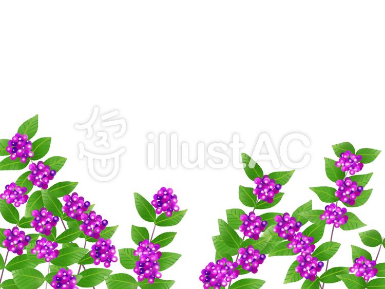 紫式部 イラスト 植物 フリー