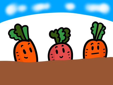 Carrot, harvest soon?