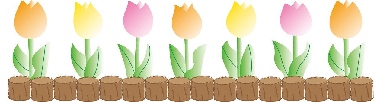 Tulip - flower bed