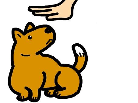 狗動物手寵物
