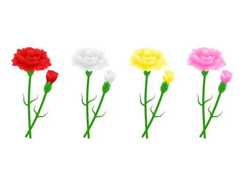 카네이션 (빨강, 흰색, 노랑, 핑크)