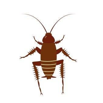Cockroach / larva