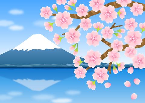 벚꽃과 후지산 02