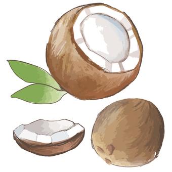 Coconut set