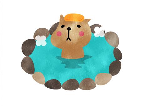 水豚溫泉可愛的動物