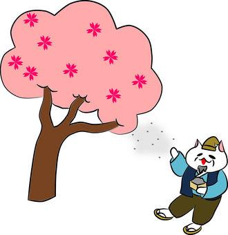 Nyankosple. Hanasaki Kajiinan