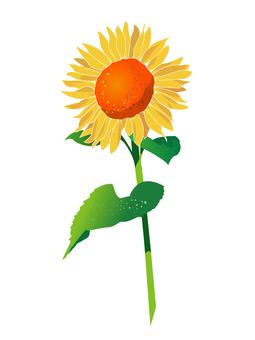 One wheel of sunflower