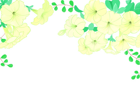 Petunia over white background