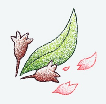 Leaves cherry tree