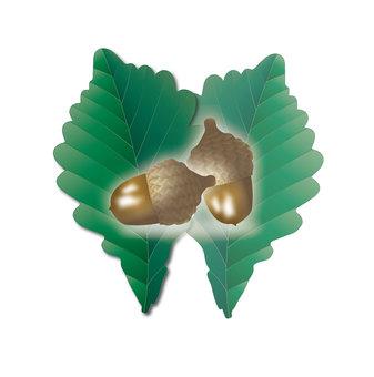 Nuts 04