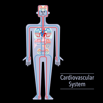 Simple illustration of circulatory system (black background)