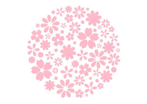 Cherry blossoms 255