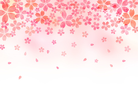 Cherry blossoms _ pastel _ pink background 1828