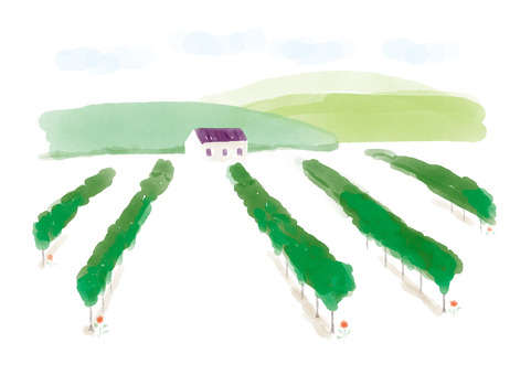 Vineyards and wineries watercolor