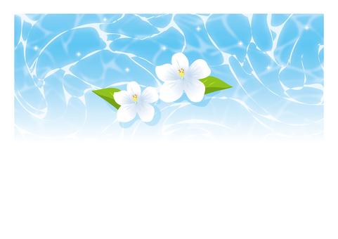 수영장 수면의 흰 꽃