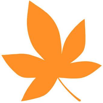 Maple of Orange