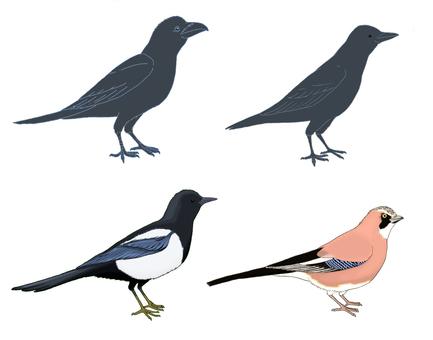 Crow friends