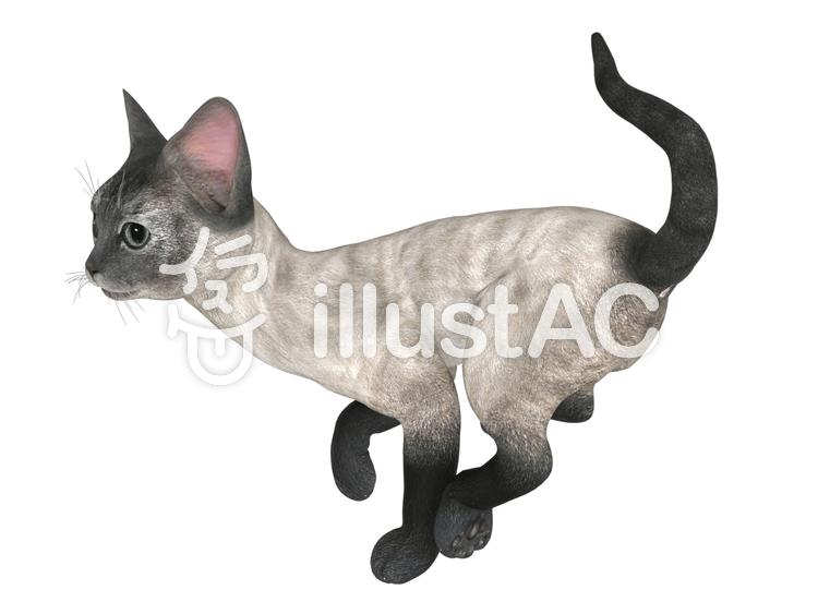 走って遊びまわる子猫(シャム)のイラスト