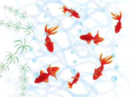 Goldfish _ wave