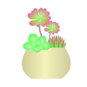 Plant plant - Succulent planting of succulent plants