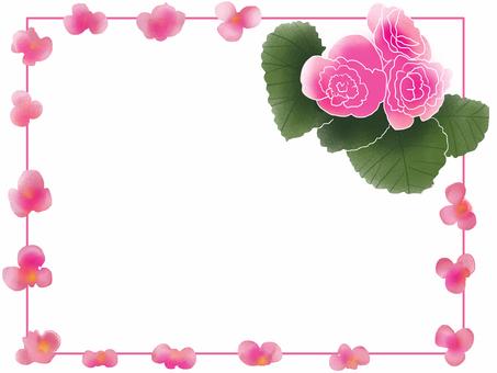 Begonia frame