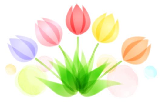 Soft image tulip