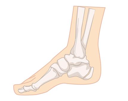 Inside the foot bone
